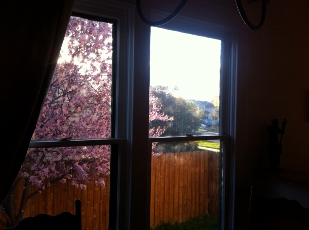 The way the sun dapples through the new crabapple tree outside the living room.
