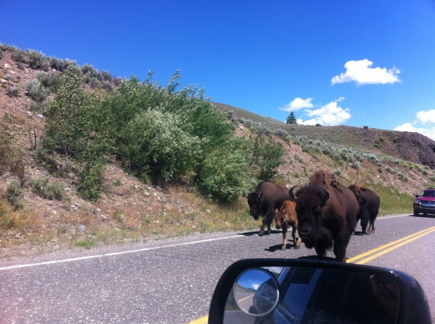 Traffic jam, Yellowstone style.