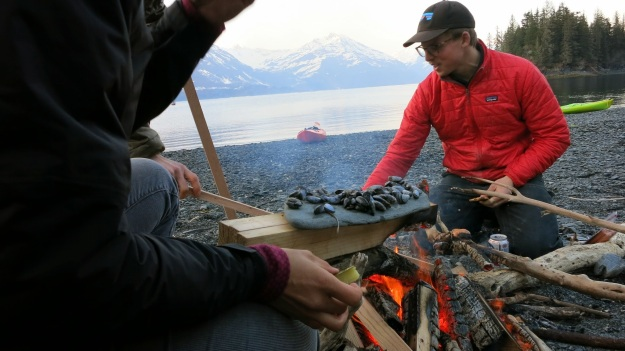 Wild harvested muscles over an open fire in Prince William Sound.